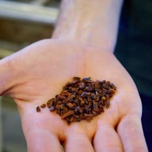 Freshly winnowed cacao nibs